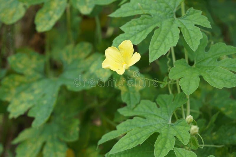 Una flor natural amarilla linda foto de archivo