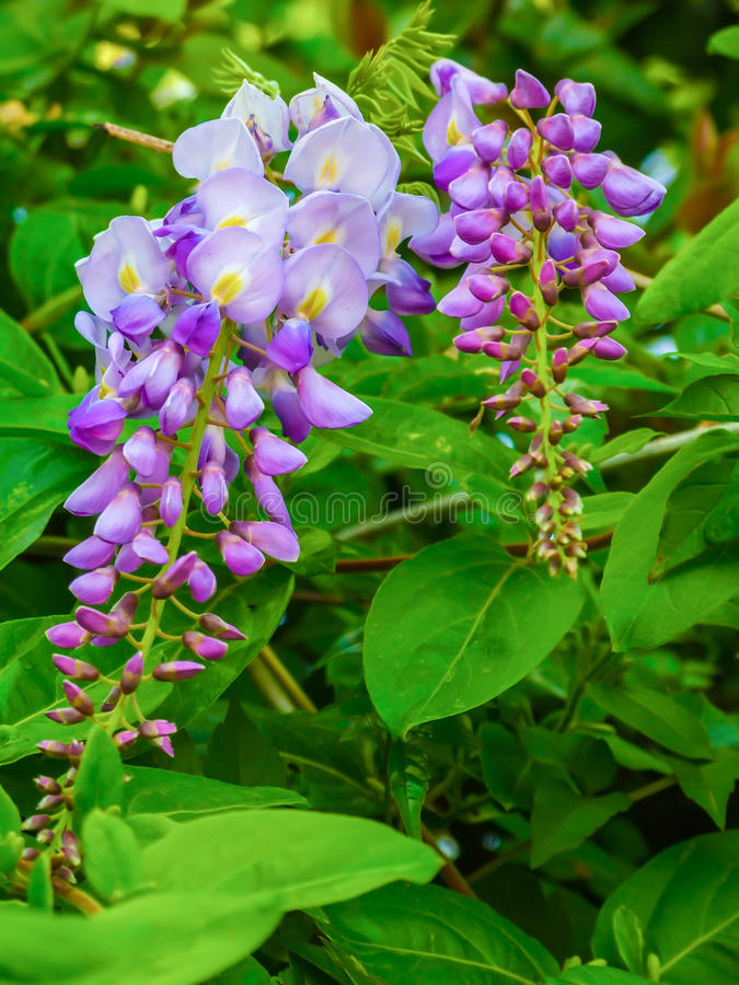 Una flor púrpura fotos de archivo