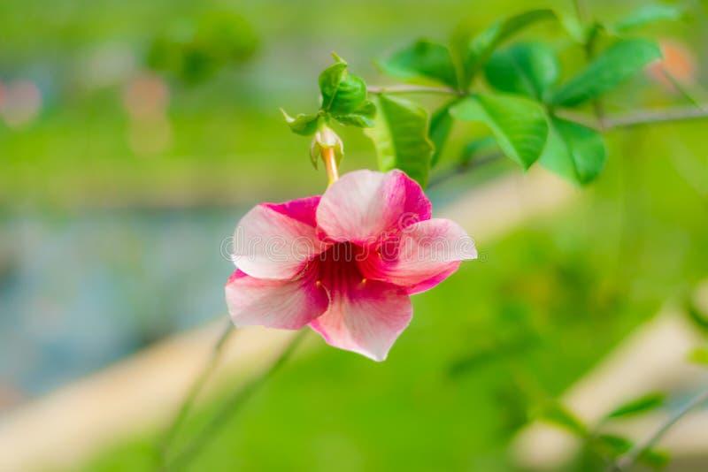 Una flor rosada contra un fondo verde foto de archivo libre de regalías
