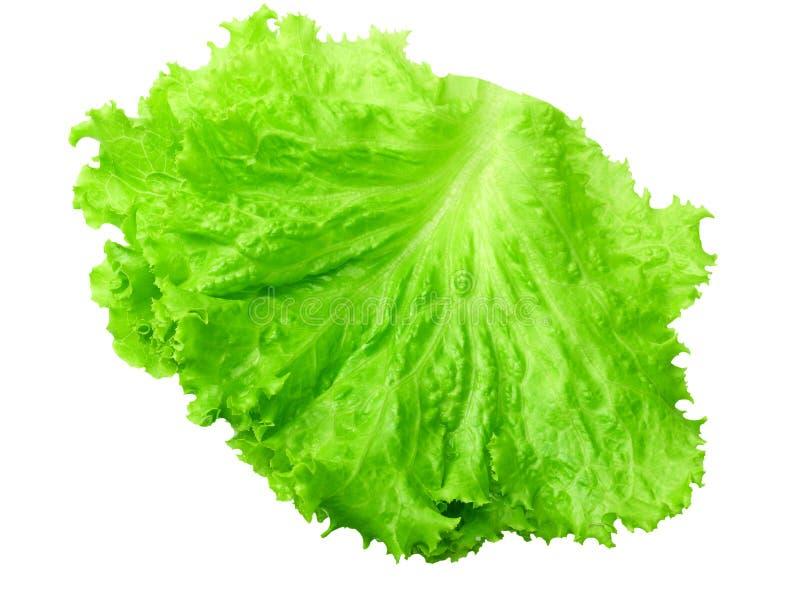 una foglia dell'insalata isolata su un fondo bianco immagine stock libera da diritti