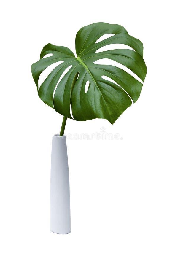 Una foglia di palma verde su un fondo bianco immagine stock