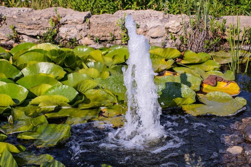 Una fontana ed alcune ninfee nel parco immagine stock