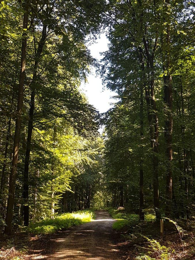 In una foresta fotografia stock