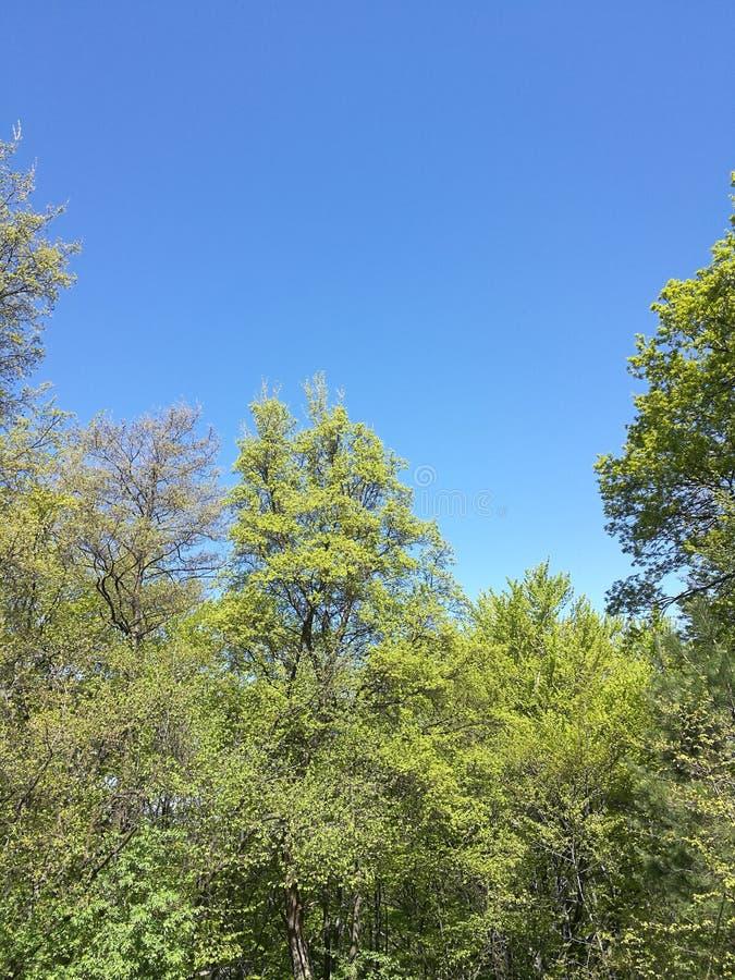 Una foresta bulgara fotografia stock