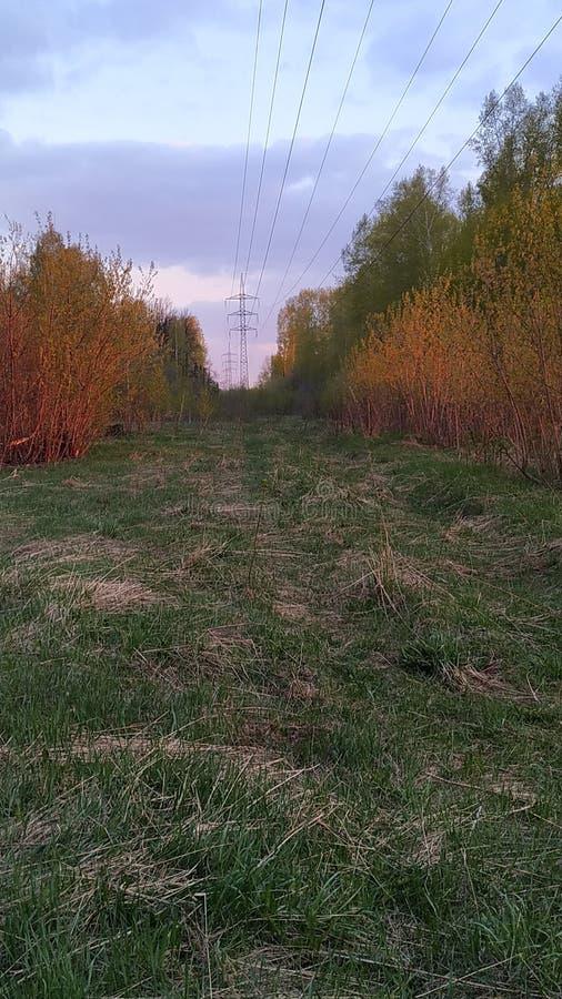 Una foresta che elimina nell'ambito delle linee elettriche con le colonne nave fotografia stock libera da diritti