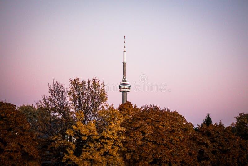Una foresta con una torre alta del segnale immagine stock