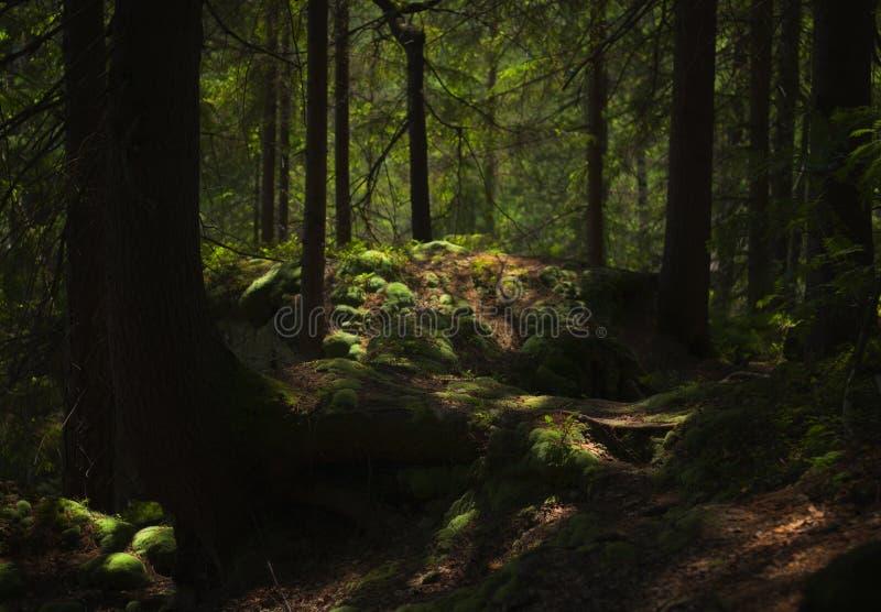 Una foresta di fiaba, non è? fotografia stock libera da diritti
