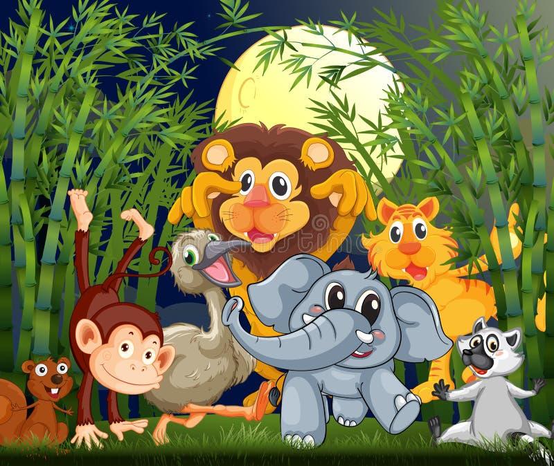 Una foresta pluviale con gli animali che passeggiano nel - Gli animali della foresta pluviale di daintree ...
