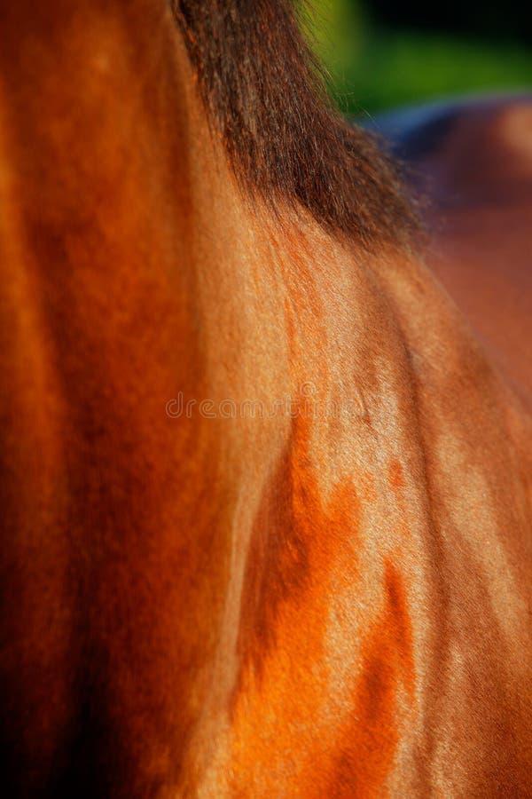 Download Una Foto Abstracta Del Caballo Que Compite Con Excelente Foto de archivo - Imagen de outdoor, doméstico: 41921790