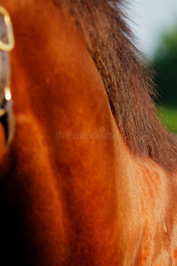 Download Una Foto Abstracta Del Caballo Que Compite Con Excelente Imagen de archivo - Imagen de color, caballo: 41921847