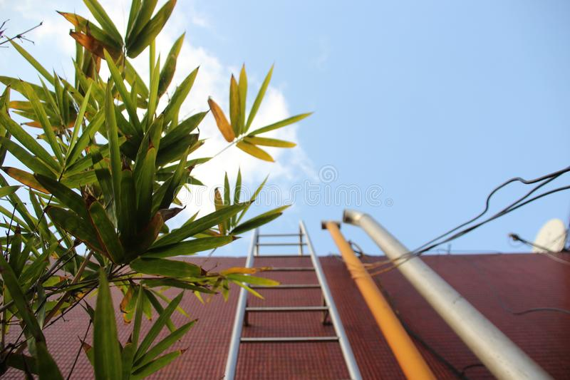 Una foto artística En el primero plano una planta verde imagen de archivo libre de regalías