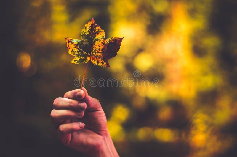 Una foto dalla foglia laterale nei colori marroni arancio di autunno Fondo molto blury immagini stock