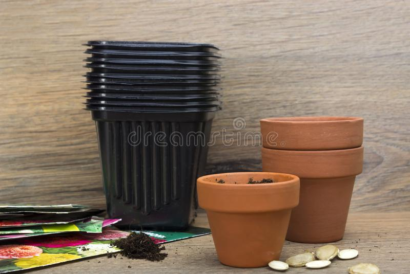 Una foto de las macetas plásticas de cerámica y negras para las semillas de las plantas, de la calabaza, de la calabaza y del cal foto de archivo libre de regalías