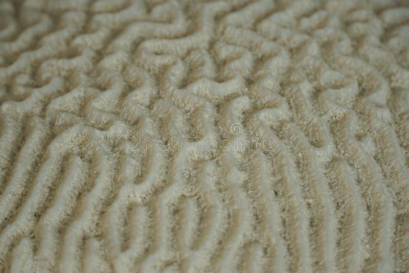 Una foto subacuática de Brain Coral foto de archivo libre de regalías