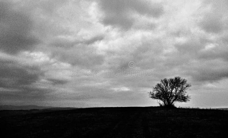 Una fotografia in bianco e nero di un albero su un pascolo enorme immagine stock libera da diritti