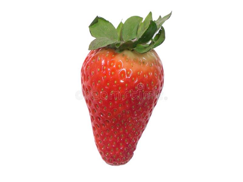 Una fresa roja fresca aislada en blanco fotografía de archivo libre de regalías