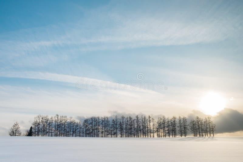 Una gama larga de árboles de pino debajo de la puesta del sol y de las nubes azules brillantes del cielo y agradables fotografía de archivo