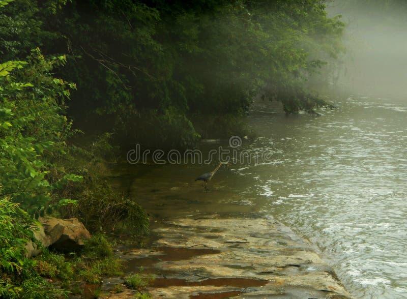 Una garza de gran azul en la niebla imagenes de archivo