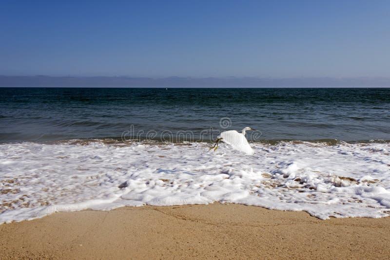 Una gaviota del vuelo sobre las ondas en el océano en Malibu, Los Ángeles, los E.E.U.U. EN VERANO fotografía de archivo