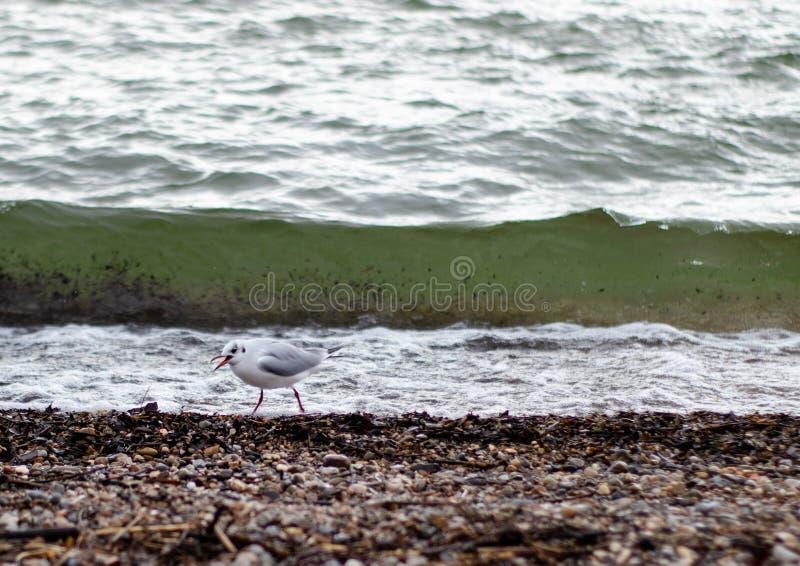 Una gaviota delante de una onda foto de archivo