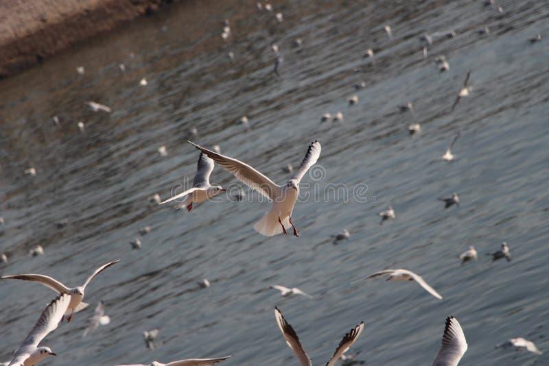 Una gaviota está aterrizando imágenes de archivo libres de regalías