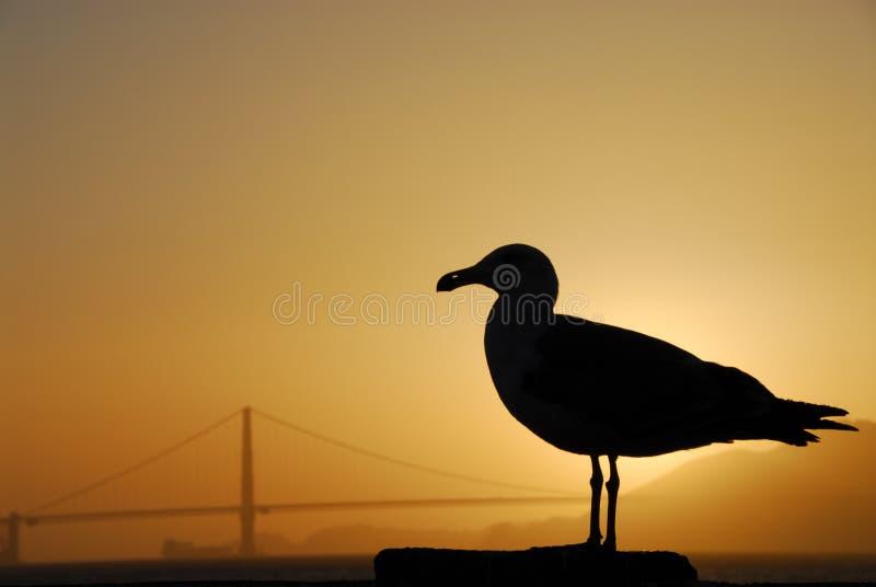 Una gaviota está en los rayos de la puesta del sol fotos de archivo