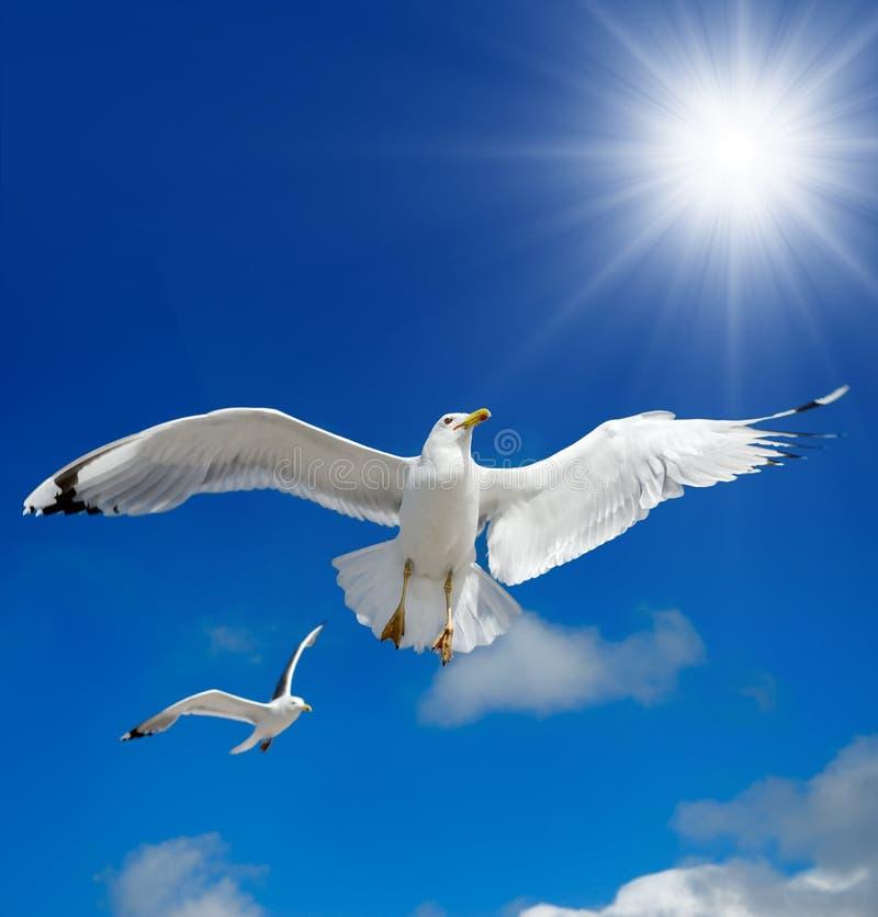 Una gaviota está volando en el cielo azul seabirds imagen de archivo