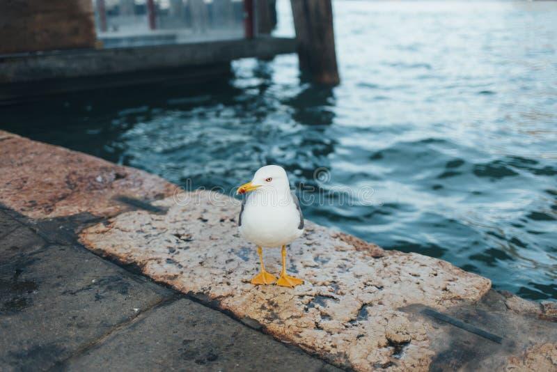Una gaviota que flota en el mar fotografía de archivo