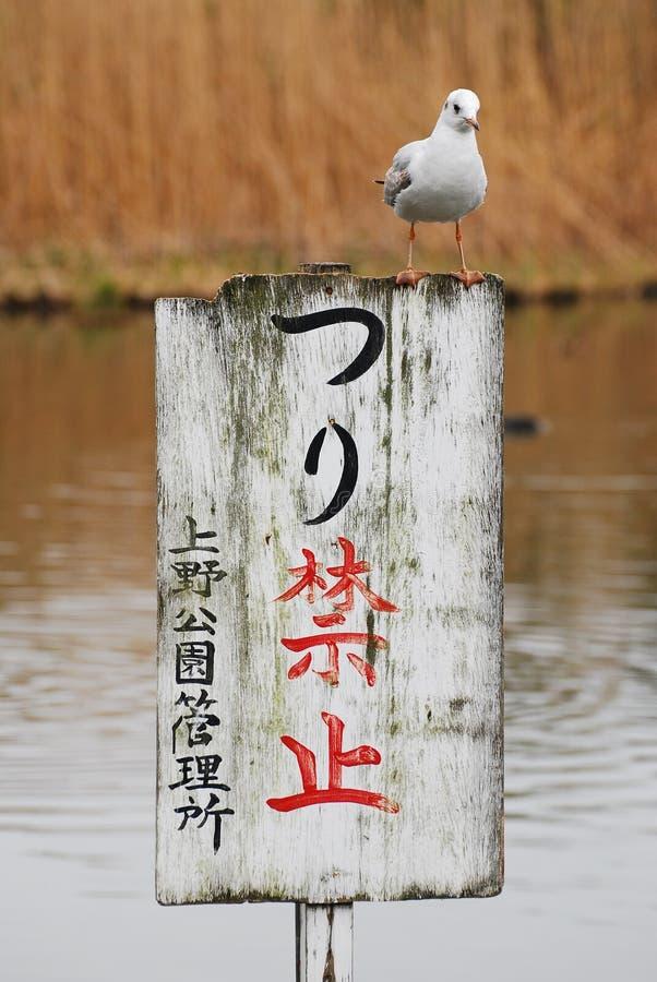 Una gaviota que se coloca en un tablón de anuncios en el parque de Ueno Onshi foto de archivo libre de regalías