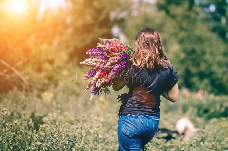 Una giovane donna cammina nel prato fra erba verde ed i lupini porpora con un mazzo dei lupini a disposizione fotografia stock