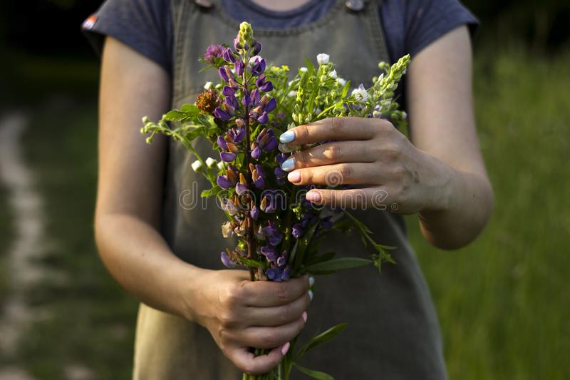 Una giovane donna con un mazzo dei fiori selvaggi in sue mani sta stando in un prato, primo piano Fondo di estate Concetto immagini stock