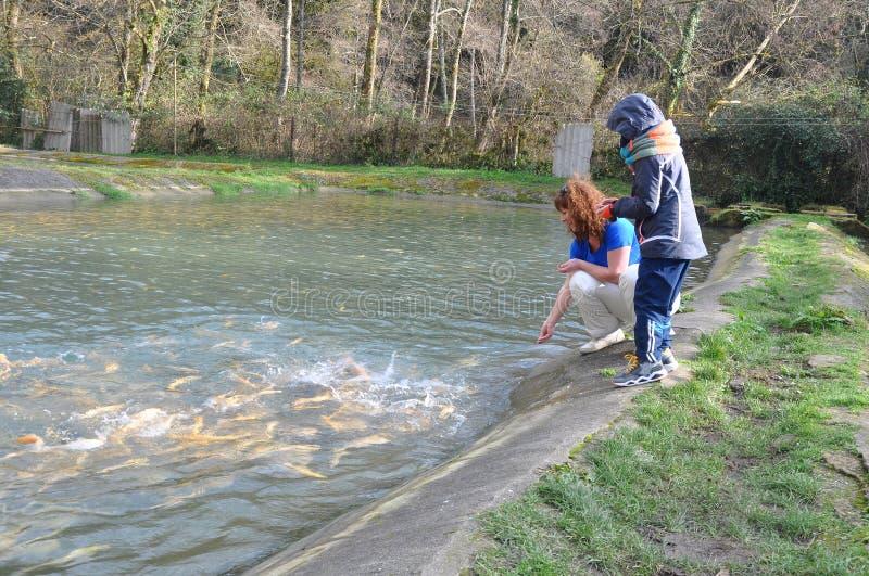 Una giovane donna ed suo figlio stanno facendo una pausa lo stagno con il pesce Ab fotografia stock libera da diritti