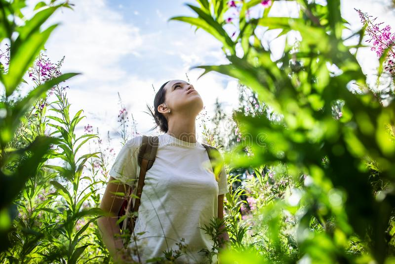Una giovane donna graziosa calma con uno zaino sta stando nei bei colori di grande angustifolium di Chamaenerion del willowherb immagine stock