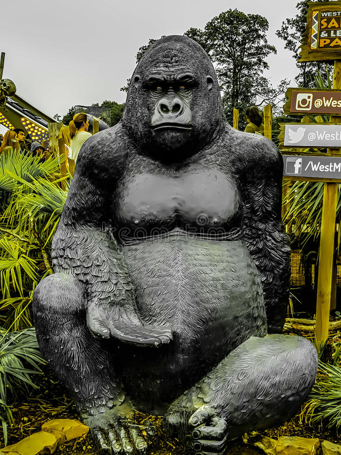 Una gorilla fotografia stock