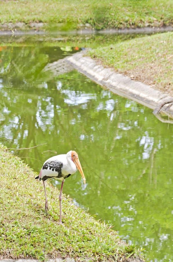 Una grande egretta fotografia stock