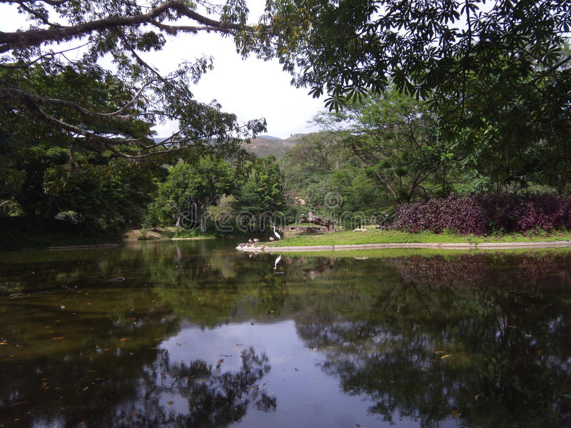 Una grande egretta su un parco a Caracas fotografia stock libera da diritti