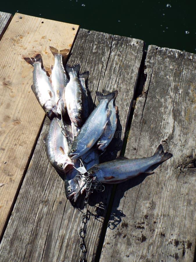 Una grande pesca di giorno per la trota fotografia stock libera da diritti