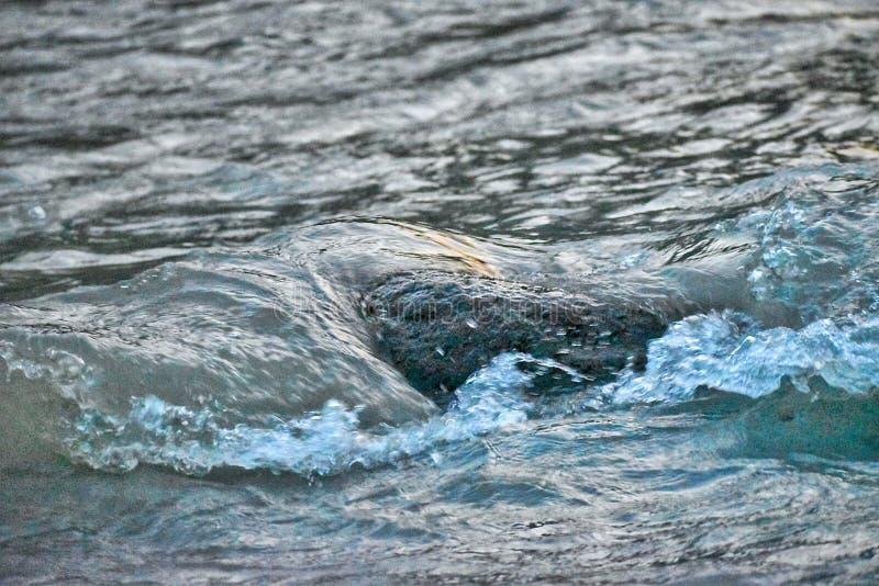 Una grande pietra sulla riva del fiume che ottiene colpo dall'onda di acqua immagini stock