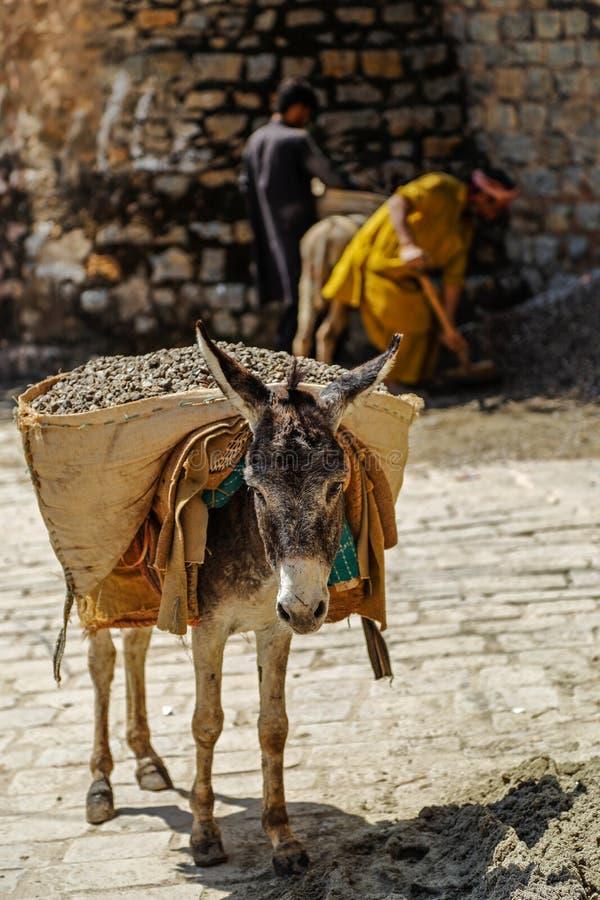 Una grava que lleva del burro, Islamabad Paquistán fotografía de archivo