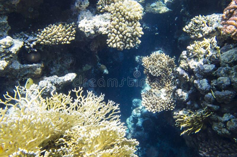 Una grieta en el arrecife de coral foto de archivo libre de regalías