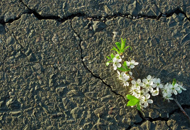 Una grieta en el asfalto Visión superior imagen de archivo