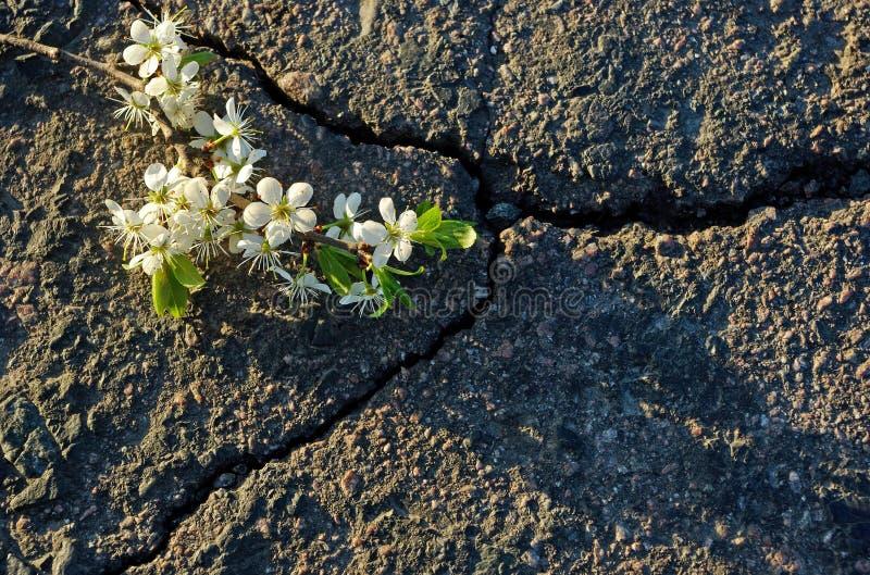 Una grieta en el asfalto Visión superior fotos de archivo libres de regalías