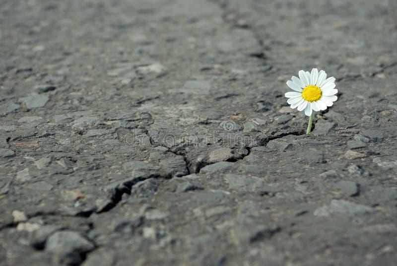 Una grieta en el fondo de la textura del asfalto Copie los espacios imagenes de archivo