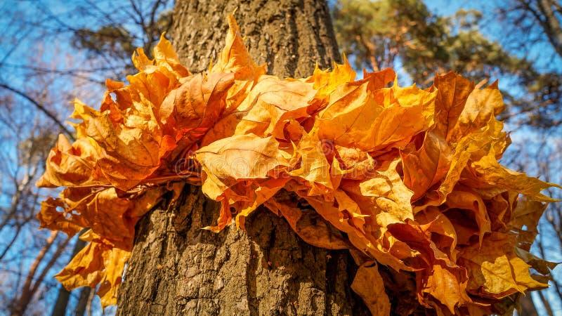Una guirnalda de hojas imagen de archivo libre de regalías