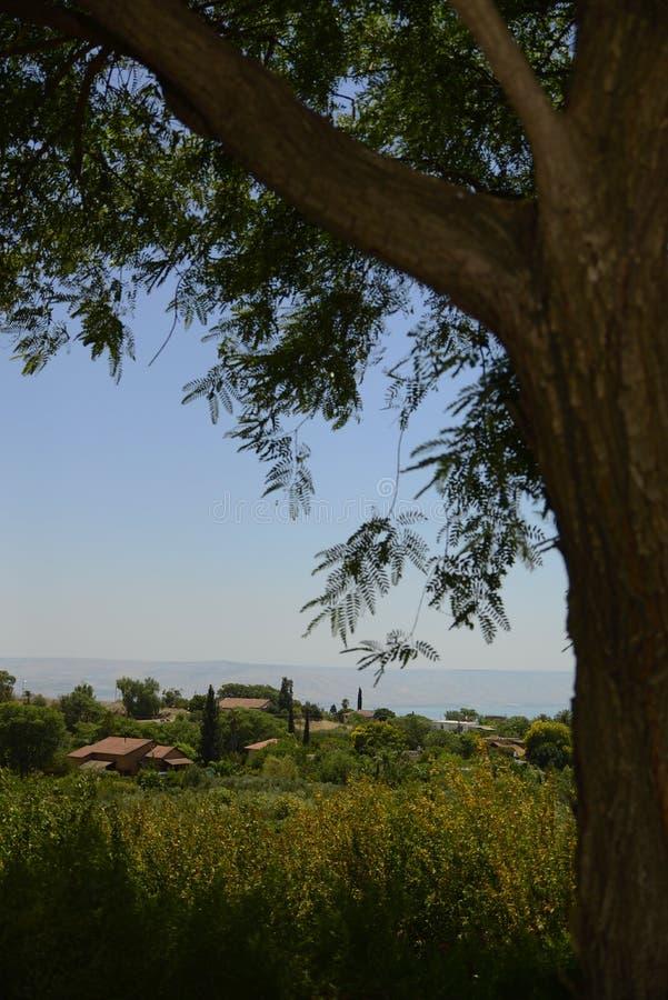 Una hermosa vista de un árbol y de Wildflowers debajo de la sombra imágenes de archivo libres de regalías