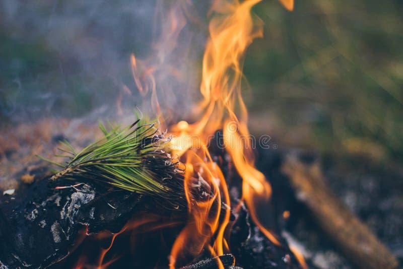 Download Una Hoguera Que Acampa Caliente Brillante Imagen de archivo - Imagen de ascuas, hoguera: 100529805