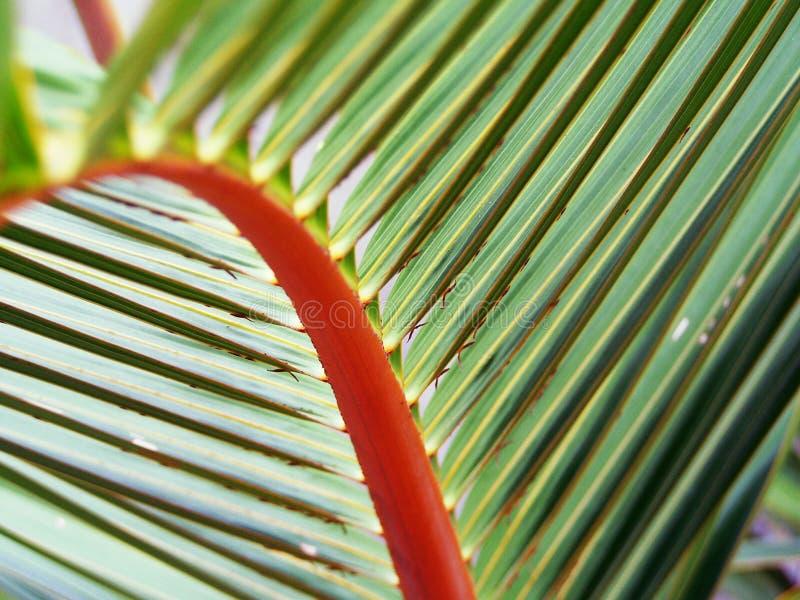Una hoja de palma perfecta para el verano fotos de archivo