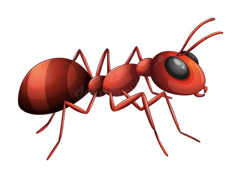 Una hormiga ilustración del vector