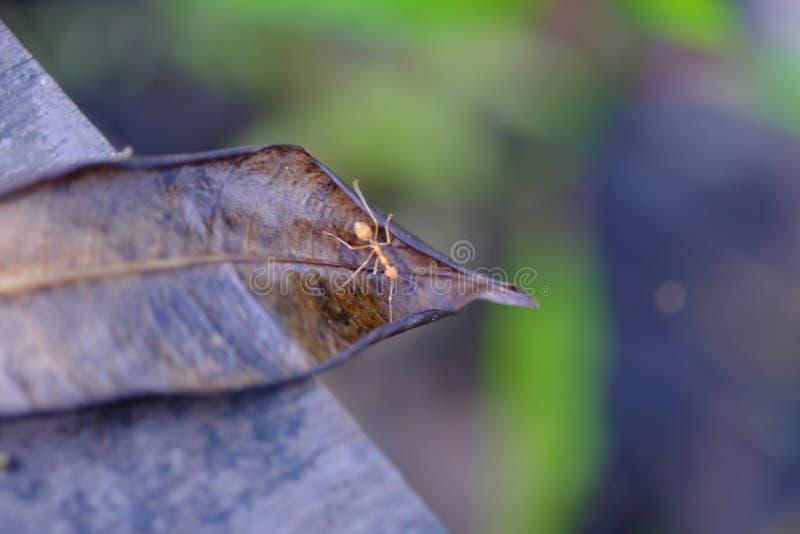 Una hormiga camina imagen de archivo libre de regalías