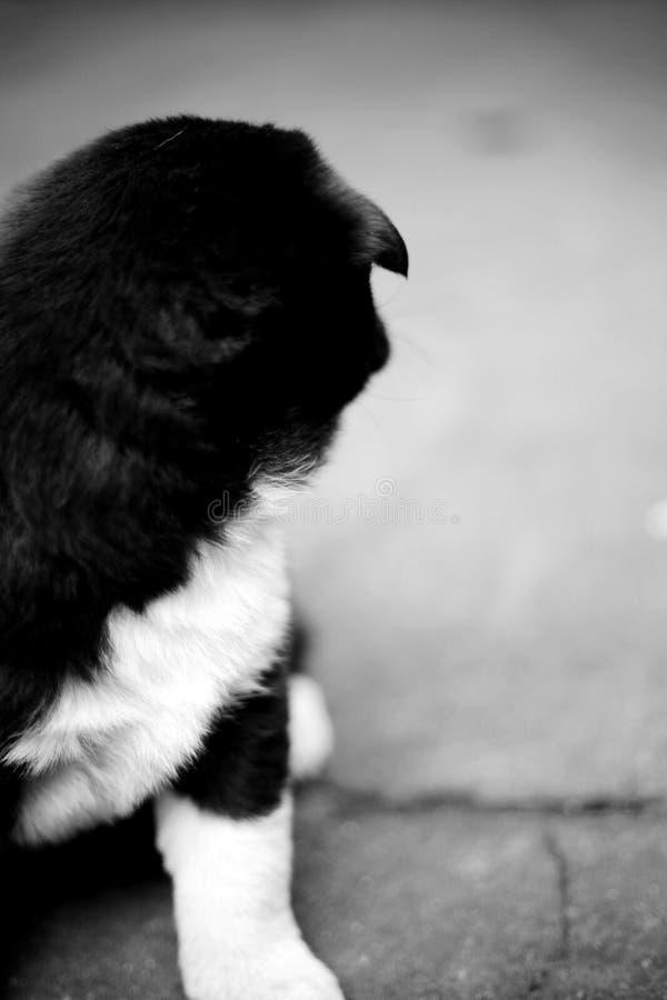 Una imagen blanco y negro de una figura sobrepuesta del ` s del perrito fotos de archivo